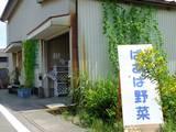 110813_ばあば野菜.jpg
