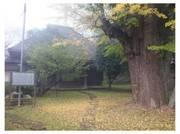 111106_西福寺.jpg