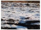 111210_雪.jpg
