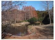 111224_布佐宮の森公園.jpg