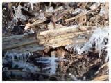 120128_地上の霜.jpg