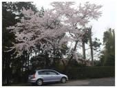 120421_桜と.jpg
