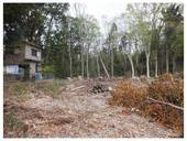 120422_西輪寺裏の林.jpg