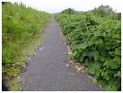 120916_印旛沼の自転車道.jpg