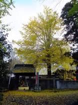 121202_西輪寺山門の外.jpg