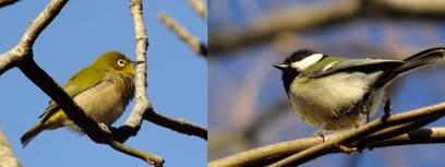130104_小室公園の小鳥.jpg