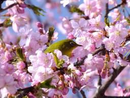 130316_花と鳥.jpg