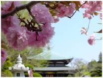 130415_和泉_泉倉寺.jpg