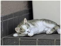 130526_ねむり猫.jpg