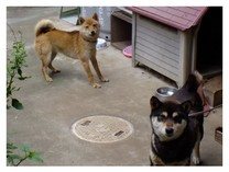 130629_薬王寺の犬.jpg