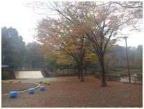 131104_小室公園ケヤキ.jpg