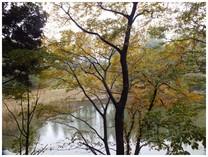131104_小室公園池の端.jpg