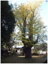 131116_西福寺.jpg