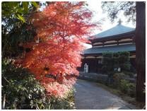 131126_泉倉寺のモミジ.jpg