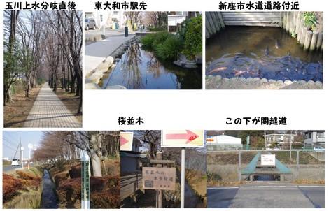 140201_野火止用水2.jpg