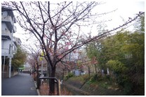 140228_坂川沿い.jpg