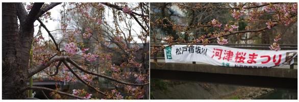 140307_松戸坂川.jpg