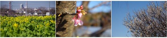 140308_手賀沼沿いの花.jpg