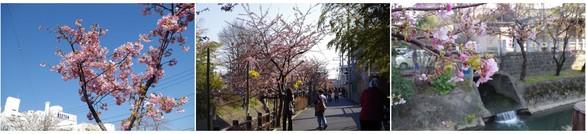 140308_松戸坂川.jpg