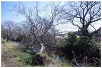 140315_今井の桜.jpg