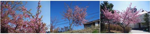 140321_河津桜.jpg