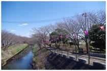 140321_海老川.jpg