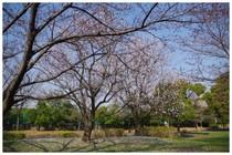 140328_中川公園.jpg