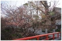 140328_松戸神社前.jpg