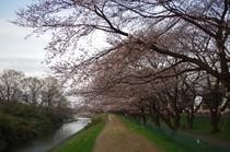 140329_柳瀬川沿い.jpg