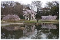 140329_清瀬金山公園.jpg