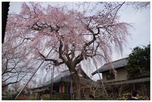 140329_金仙寺.jpg