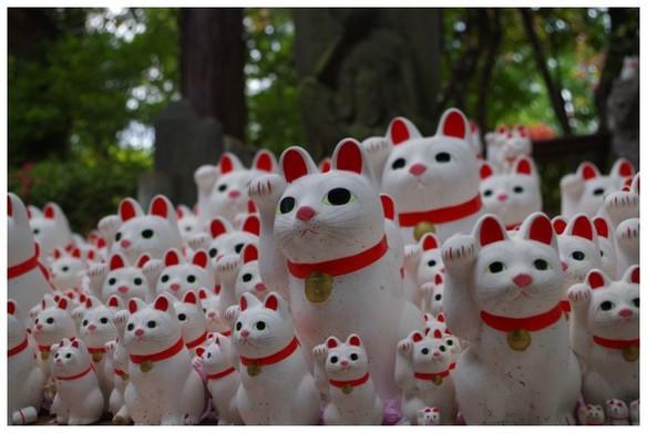 140419_豪徳寺の招き猫.jpg