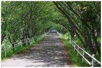 140502_桜の道.jpg