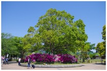 140504_我孫子公園.jpg