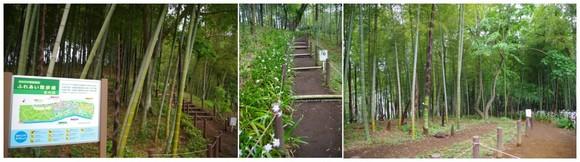 140506_軽井沢ふれあい散歩道.jpg