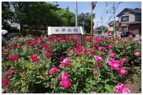 140511_谷津公園入口.jpg