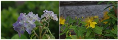 140531_梅雨時の花.jpg