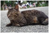 140706_神社の猫.jpg