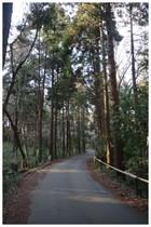 150111_林の中の道.jpg