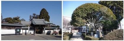 150125_寶樹禅寺.jpg