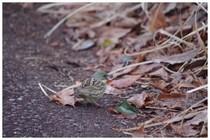 150222_小鳥.jpg