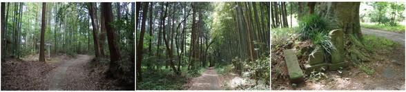 20150503_旧本埜村の林の中.jpg