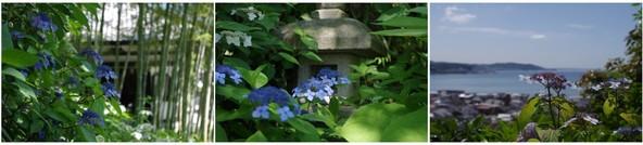 20150530_長谷寺の紫陽花.jpg