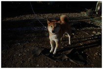 20151205_西福寺前の犬.jpg