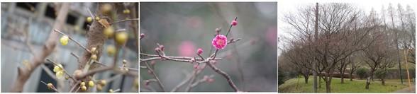 20151223_梅の花.jpg