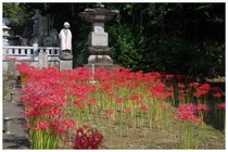 20159021_結縁寺2.jpg
