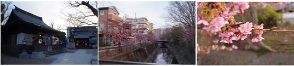 20160220_松戸坂川.jpg