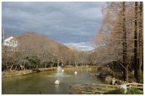 20160221_貝柄山公園.jpg