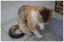 20161008_大杉神社にいた猫.jpg