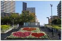 20161105_幕張海浜公園花のスロープ.jpg